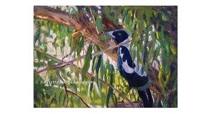 Magpie In My Garden Eltham VIC final